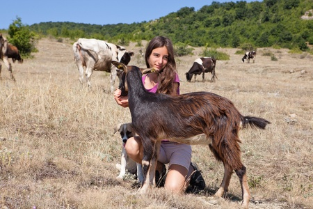 Shepherd girl looking after cattle in the Bulgarian mountains photo