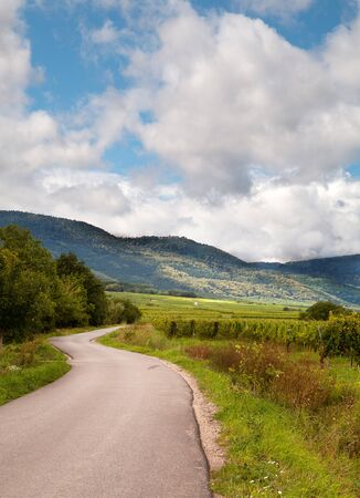 andlau: Curcing road through the French vineyards of the Alsace region near Andlau Stock Photo