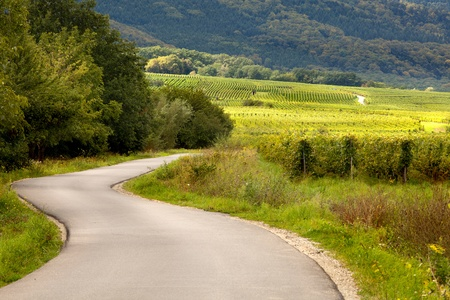wineries: Summer view on curving road through the French vineyards of the Alsace region near Andlau Stock Photo