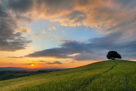 Żywe kolory o zachodzie słońca nad samotnym drzewem na wzgórzu w Toskanii