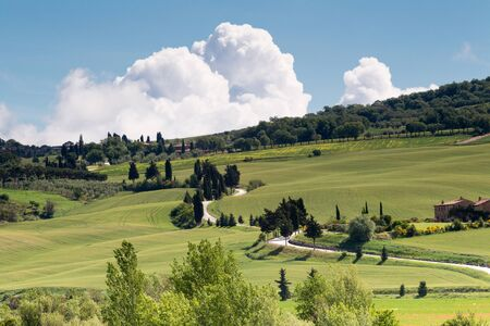 Typical winding roads in the rolling green hills of Tuscany near Pienza Stock Photo - 14243662
