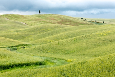val dorcia: Springtime green hills in a Tuscan valley in Val dOrcia Italy