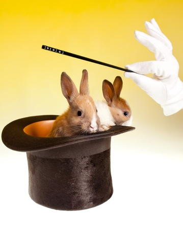 Magic wand and magicians hand with two rabbits coming out of a black top hat photo