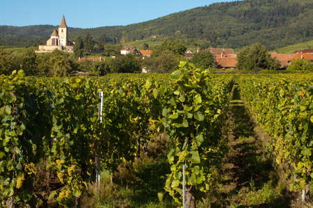 Village church of Hunawihr wine village in the middle of vineyards of Alsace, France Stock Photo - 14594644