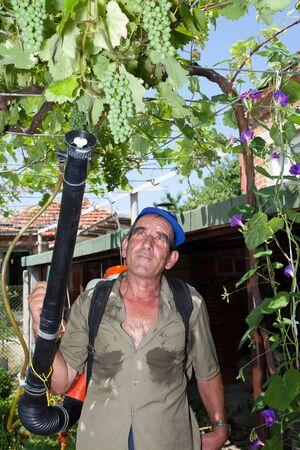 Bulgardian vineyard with old farmer spraying the vines photo