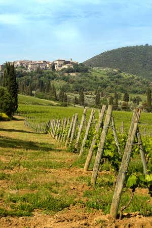 antimo: Vineyard near the village San Antimo in Tuscany Italy Stock Photo