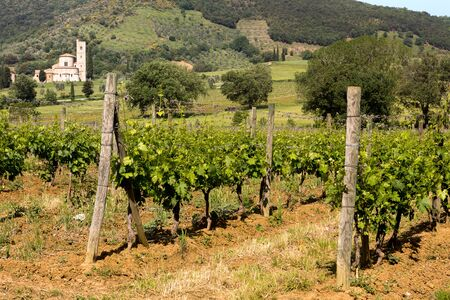 antimo: San Antimo Abbey and vineyards in Tuscany Italy