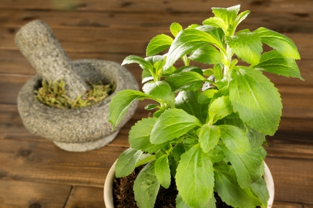 sweetening: Fresh potted stevia plant and dried leaves in a mortar Stock Photo