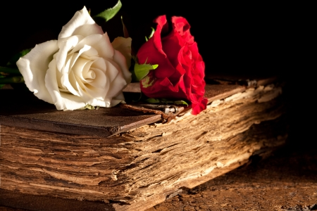 Romantic roses lying on a medieval old book photo