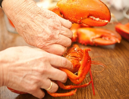 cracking: Hands cracking and cutting a cooked lobster in a restaurant Stock Photo