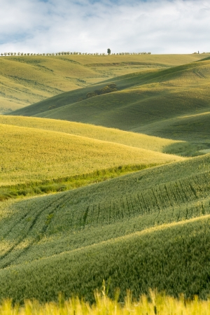 View on the gree rolling hills of Tuscany near Pienza Stock Photo - 16924734