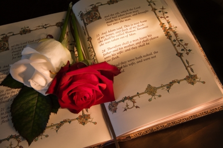 adam eve: Roses and bible with Genesis text of Adam and Eve, a typical wedding text - the book illustration is copied from a 400 years old bible. Stock Photo
