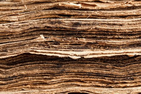 tattered: Extreme closeup on the tattered pages of a 300 years old ancient book