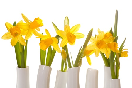 White little vases filled with fresh daffodils Stock Photo - 17475105