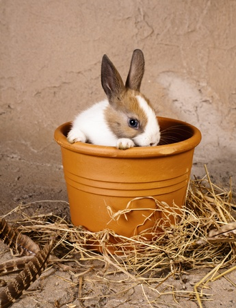 Shy little rabbit baby in a big flowerpot Stock Photo - 17623361