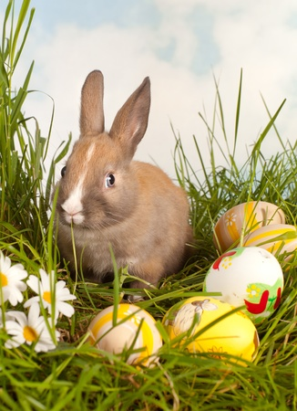 Brown baby easter rabbit looking at colorful eggs Stock Photo - 17779437