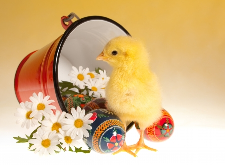 Red bucket with easter eggs, daisies and a newborn yellow chick Stock Photo - 17779434