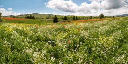 Panoramic view on a wildflower field in the rolling hills of Tuscany near Pienza Italy photo
