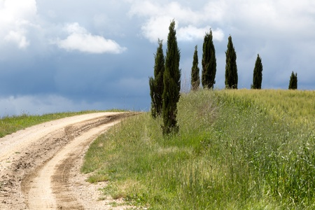 Cypress trees alonside a footpath up the Tuscan hills near Pienza Stock Photo - 18976788