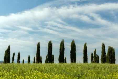 Famous circle of cypress trees on a sunny day in Tuscany Italy photo