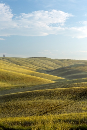 View on the wide horizon with cypress trees in the rolling hills of Tuscany near Pienza Stock Photo - 19263755