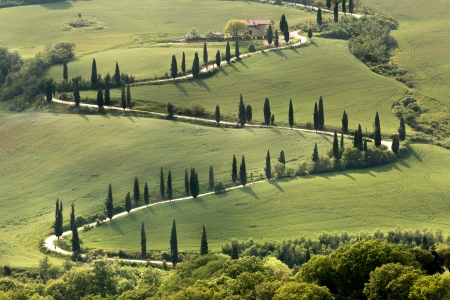 Cypresses along a curving road in Tuscany near Al Foce photo