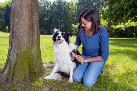 combing: Young woman taking care of her dogs fur in the park