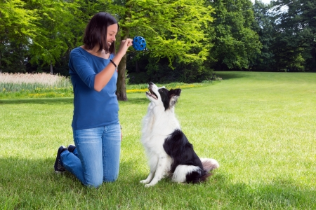 fetch: Woman in the park playing fetch with her border collie dog