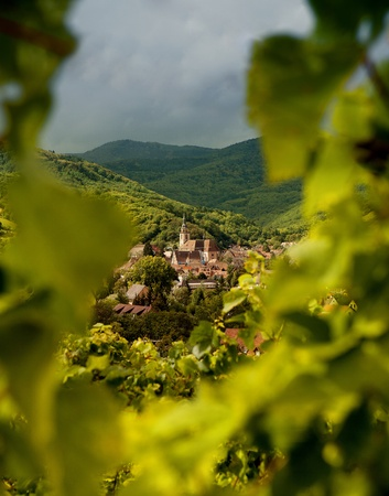 andlau: View on Andlau wine village in Alsace France through blurred vines