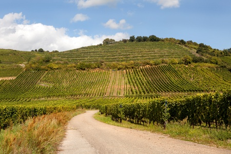 wine road: View on the famous wine route in Alsace France offers this view on a curving road through the vineyards near Riquewihr Stock Photo