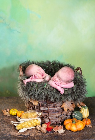 Autumn basket with halloween pumpkins and two adorable newborn twin babies Stock Photo - 21493784