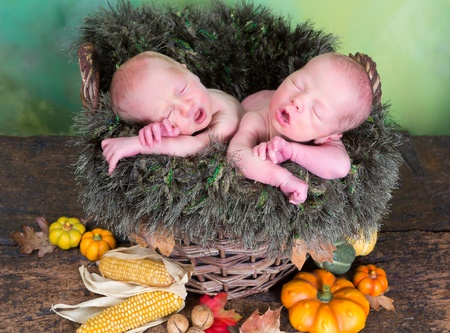 Autumn wicker basket with newborn twins with their mouths open like little birds photo