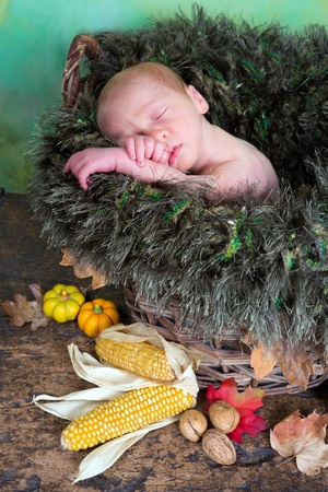 Newborn baby in a wicker basket with autumn leaves and nuts photo