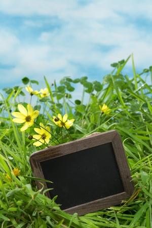 adn: Junta de texto vac�o en un prado con hierba adn tr�bol