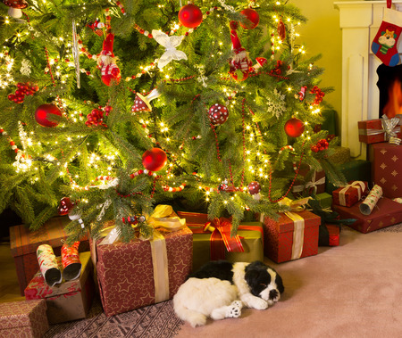 Colorful presents and a dog under the christmas tree