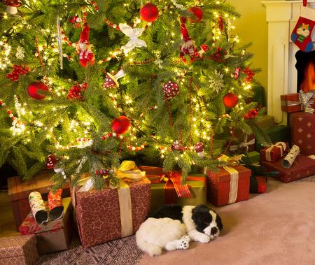 arbre: Présents colorés et un chien sous le sapin de Noël