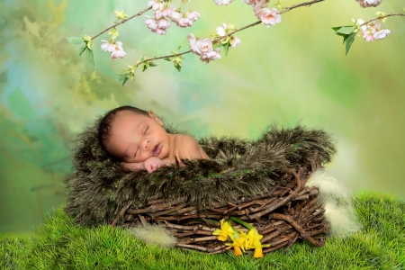 baby flower: Sleeping african baby in a springtime or easter nest