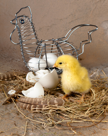 Metal easter basket with eggs and yellow little chick photo