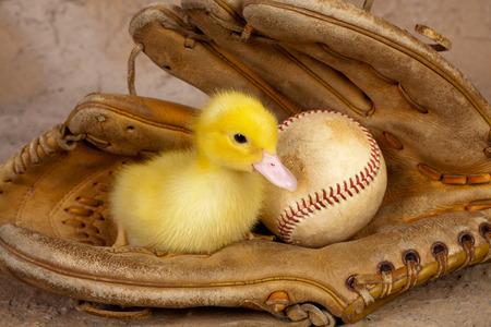 guante beisbol: Old degradado guante de b�isbol con un patito amarillo lindo Pascua Foto de archivo