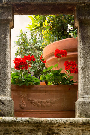 italian village: Flowers on medieval stairs in the village of Lucignano dAsso in Tuscany Italy