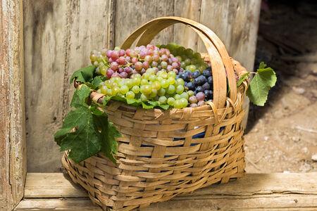 Vecchio cesto di vimini riempito con uve in piedi contro una porta di legno dell'azienda agricola grunge Archivio Fotografico