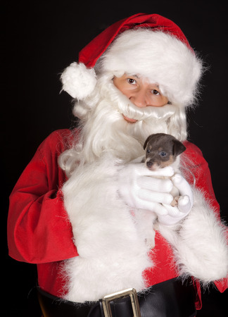 Santa claus bringing a 6 weeks old puppy jack russel dog Stock Photo