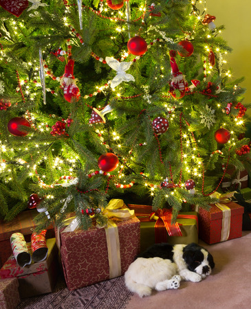 Sleepy dog lying under the decorated christmas tree photo