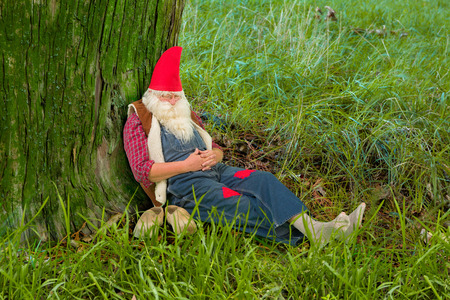 dwarf costume: Funny gnome sleeping under a tree in the forest
