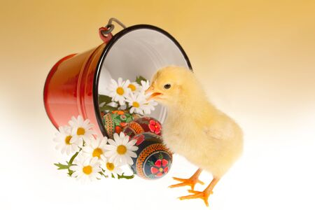 russian easter: Traditional russian easter eggs and yellow newborn chick