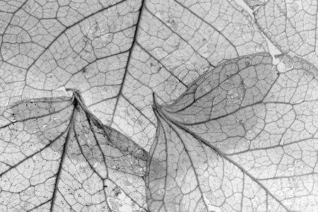 Background image texturée faite de nervures des feuilles délicates