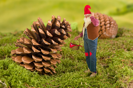 dwarf costume: Old garden gnome with miniature basket standing in front of a pinecone Stock Photo