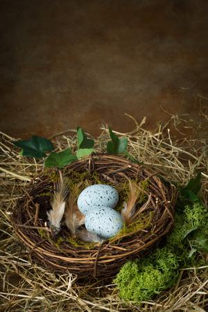 nido de pajaros: Huevos moteados de color azul situada en el nido de un p�jaro
