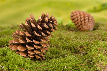 Background for fairytale or garden gnome scenes with pinecones photo