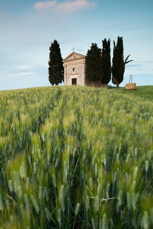 san quirico d'orcia: Wheatfield and cypress trees at a chapel in Tuscany, Italy